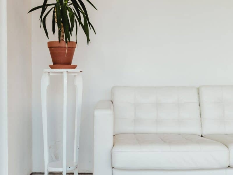 white couch with white plant stand and green plant